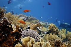 Doral-Scogliera profonda con i pesci intorno Fotografia Stock Libera da Diritti