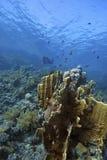 Doral-Scogliera profonda con i pesci intorno immagine stock libera da diritti