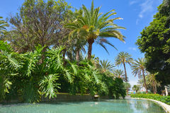 Doramas公园在拉斯帕尔马斯de大加那利岛,西班牙 库存照片