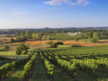 Dordogne Vineyard Stock Photos