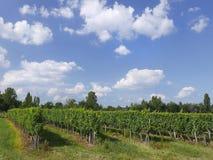 Dordogne vingård Fotografering för Bildbyråer