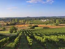 Dordogne vingård Arkivfoton