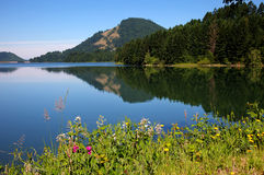 Dorena Reservoir. On a still morning near Cottage Grove Oregon USA America royalty free stock photos
