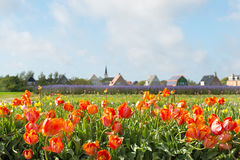 Dorf Den Hoorn an den Holländern Texel Stockfotografie