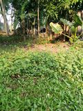 Dorf Grasblume stockfoto