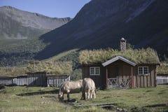 Dorf im Berg, Herdals Bauernhof, Norwegen Stockfotografie