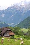 Dorf LifeSwiss-Bergdorf mit Kühen und Alpen Lizenzfreies Stockbild