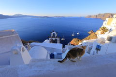 Dorf Oia (Ia) auf Santorini-Insel morgens, Griechenland lizenzfreie stockbilder