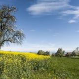 Dorf umgeben durch Felder der Luzerne Lizenzfreies Stockfoto