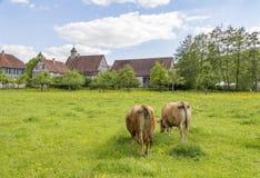 Dorf und Kühe Lizenzfreies Stockbild