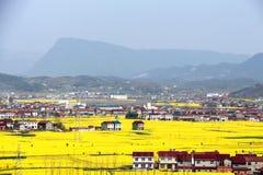 Dorf- und Vergewaltigungsblume Stockbilder