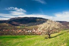 Dorf unter den Bergen in Siebenbürgen mit einsamem Frühlingsbaum. stockfoto