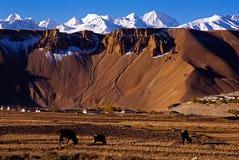 Dorf am Vorberg von Himalaja Stockbild