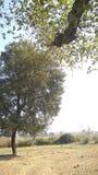 Dorfbauernhof sunnyday lizenzfreies stockbild
