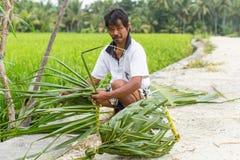Dorfbewohner, der nahe den Reisfeldern sitzt und einen Korb aus Palmblättern heraus spinnt Stockbild