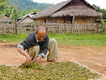Dorfbewohner trocknet Teeblätter in Birma Lizenzfreie Stockfotos