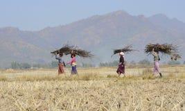 Dorffrauen, die Brennholz tragen Stockfotos