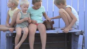 Dorfkinderspiel im Hof des ländlichen Hauses mit rotem Schwein von Duroczucht Kinder schauen heraus auf Schutz mit lila Bretterza stock footage