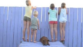 Dorfkinderspiel im Hof des ländlichen Hauses mit rotem Schwein von Duroczucht Kinder schauen heraus auf Schutz mit lila Bretterza stock video