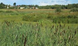 Dorflandschaft im Sommer Stockfotografie