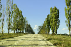 Dorfstraße durch Bäume Stockfotos