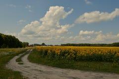 Dorfweg und Felder von Sonnenblumen Stockbild