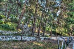 Dorgali pinewood. In Hdr tone, Sardinia Royalty Free Stock Photos