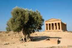 Doric Tempel von Concordia mit Olivenbaum Stockbilder