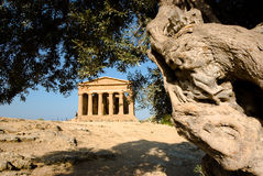 Doric temple of Concordia with olive tree stock photos