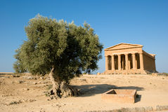 Doric temple of Concordia with olive tree Stock Images