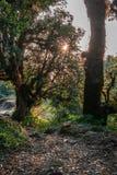 Doriya Tal Trek - Sari Village - Uttrakhand, la India imagen de archivo libre de regalías