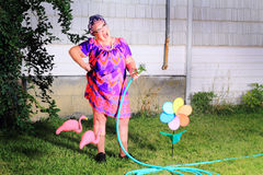 Dorky laughing granny gardener. A laughing silly senior gray haired granny gardener lady wearing cat eye glasses, a muumuu dress, pearls and curlers in her hair stock image