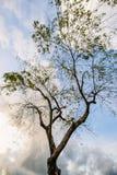 Dormí debajo de un árbol Fotografía de archivo