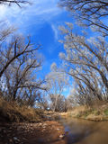 Dormant Cottonwood Trees line the banks of a stream in southern arizona Stock Photos