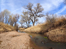 Dormant Cottonwoods Line the Banks of the San Pedro Royalty Free Stock Images