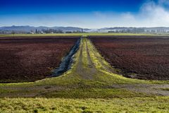 Dormant cranberry fields in Langley British Columbia. Scenic rural dormant cranberry farm landscape with a well worn trail dividing two fields stock images