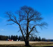 Dormant Tree in Kane County. This is a Winter picture of a dormant tree a One a farm field located in Elburn, Illinois in Kane County. This picture was taken on stock photos