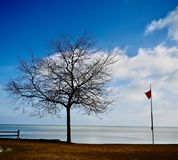 Dormant Tree Overlooking Lake Michigan. This is a Winter picture of a dormant tree overlooking Lake Michigan and featuring the beach conditions below the horizon stock image