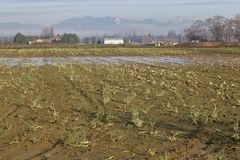 Dormant Winter Farm Land. A farm acreage sits unseeded and dormant during the winter season Stock Photo