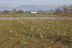 Dormant Winter Farm Land Stock Photo