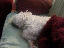 Dormido en el último Foto de archivo libre de regalías