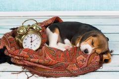 Dormido más de la cuenta Imagen de archivo libre de regalías