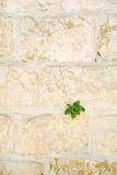 Dormitions-Abtei in Jerusalem wand Stockfoto