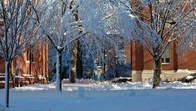 Dormitorios en la Universidad de Harvard en invierno fotos de archivo