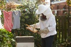 Dorośleć mężczyzna Zbierackiego miód Od roju W ogródzie Zdjęcia Royalty Free