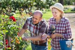 Dorośleć pary angażującej w ogrodnictwie Zdjęcie Royalty Free