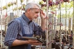 Dorosła ogrodniczka sprawdza rośliien choroby Ręki trzyma pastylkę W szkłach, broda, jest ubranym kombinezony W ogródzie zdjęcia stock