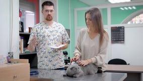 Dorosła samiec muska jej popielatego kota, kłama na stole weterynarz jest ordynacyjnym młodą kobietą w biurze, dziewczyna zbiory wideo