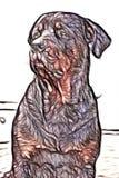 Dorosłej samiec rottweiler royalty ilustracja