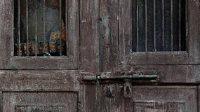 dorosły dziecka drzwiowej rękojeści chwyta kędziorek Zdjęcia Stock